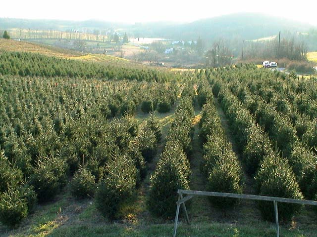 - Holiday Tree Farm
